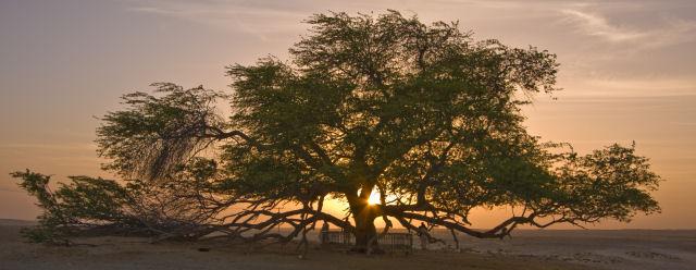I 5 alberi più strani del mondo