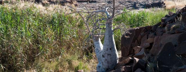 L'albero bottiglia
