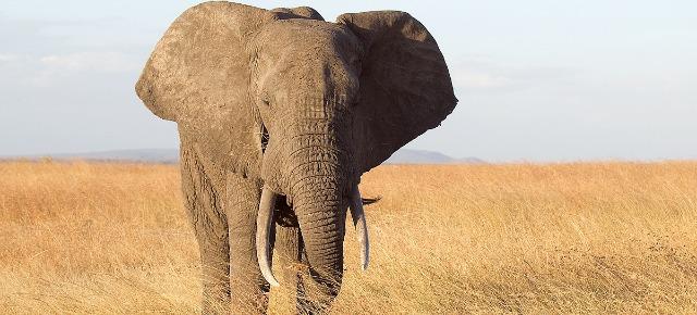 I cinque animali più pesanti al mondo