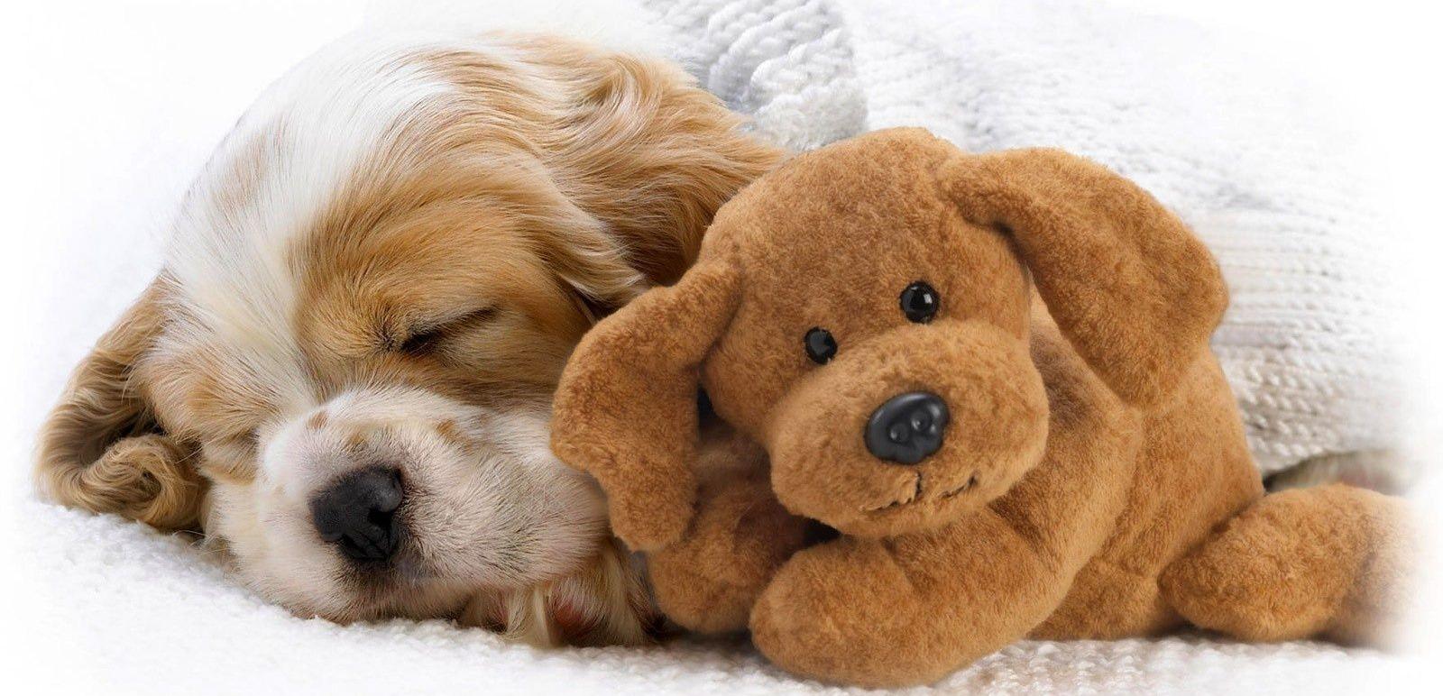 Un cucciolo ti cambia la vita al 100%
