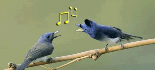 Gli uccellini