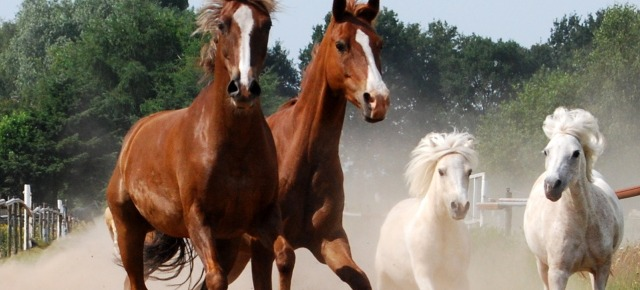 Un cavallo come senatore