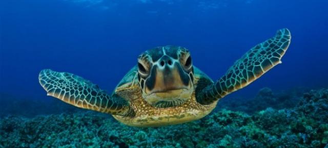 Tua madre è una grande tartaruga
