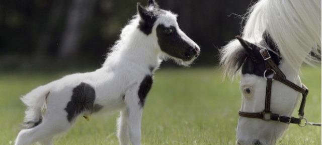 Ecco i 5 animali più piccoli del mondo