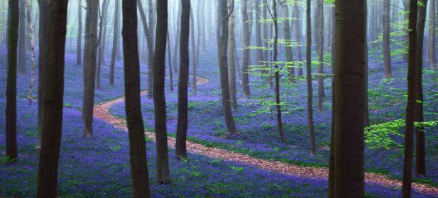 Foresta di Hellerbos, Belgio