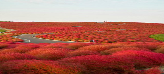 Hitachi Seaside Park Path – Giappone