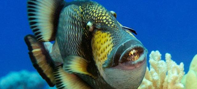 I 5 animali con i denti più terrificanti