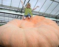 Ecco la zucca più grande del mondo