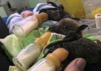 Asilo nido per pipistrelli
