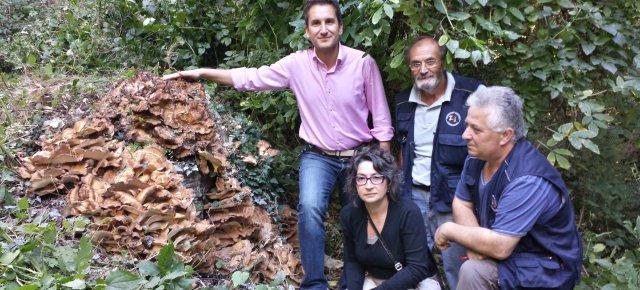 Trovato nelle Marche un fungo di 80kg