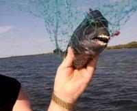 Il pesce con denti umani
