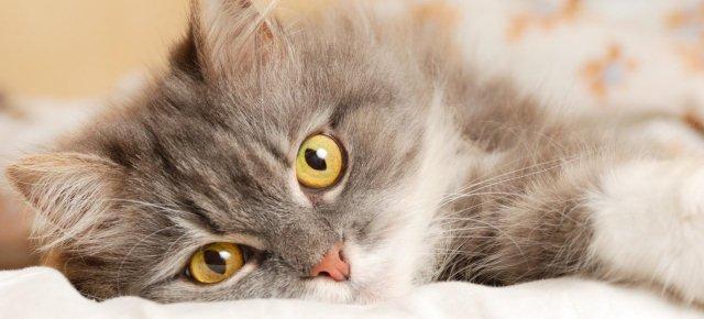 Gatti allergici agli umani