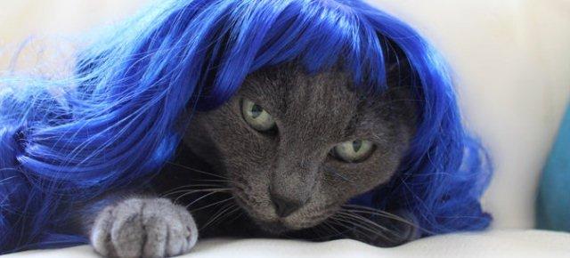 Ecco le parrucche per animali domestici