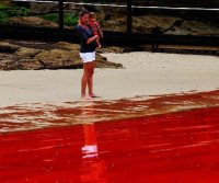 Australia: mare rosso sangue