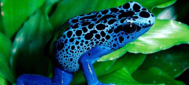 Principi azzurri o semplici rane blu?