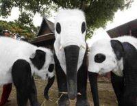 Elefanti verniciati come panda