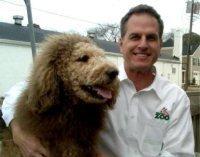 Labrador scambiato per leone