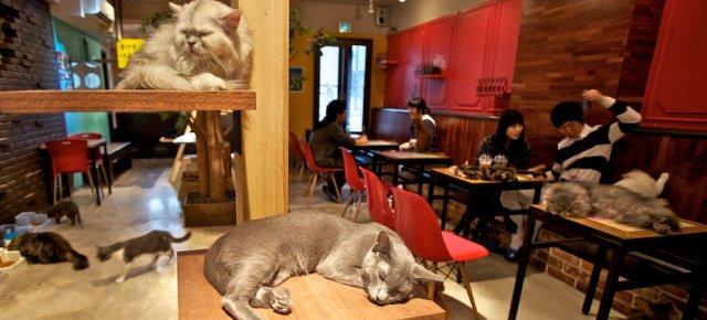 A Torino arriva il primo cat cafè italiano