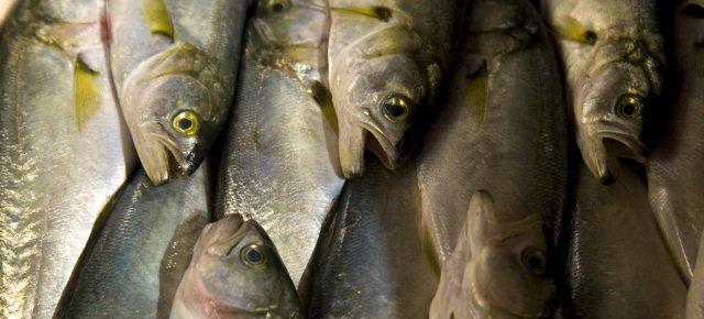 Puzza di pesce marcio per una malattia