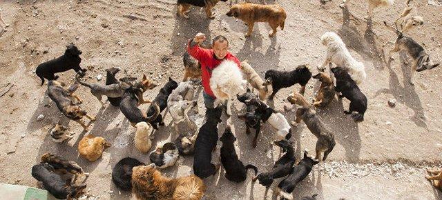 Miliardario sul lastrico per aiutare i cani