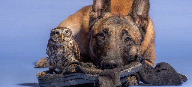 Un cane  e un gufo inseparabili