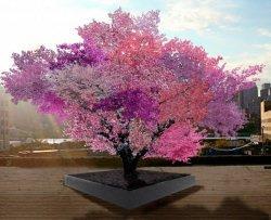Crea un albero che produce 40 frutti