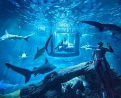 Dormire tra gli squali dell'acquario di Parigi