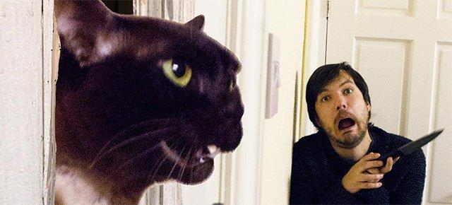 Ricreano le scene dei film con i loro gatti