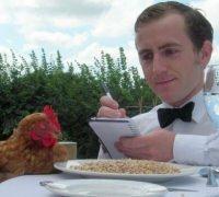 Arriva il primo hotel per galline