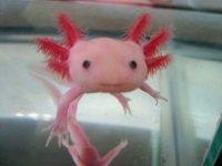 L'animale più carino al mondo