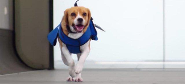 Beagle riporta oggetti smarriti in aereo