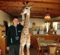 Fenne, la giraffa domestica