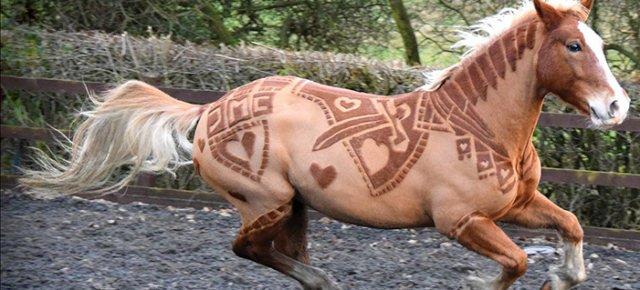 Artista trasforma cavalli in opere d'arte