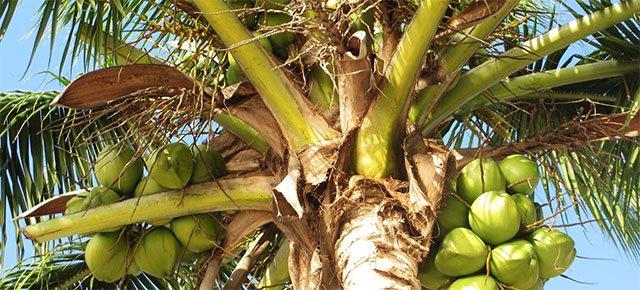 Trascorre 3 anni su una palma di 20 metri