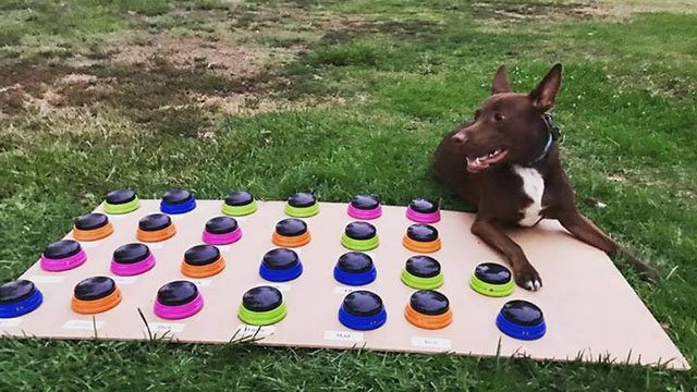Cani parlanti: animali che parlano coi pulsanti