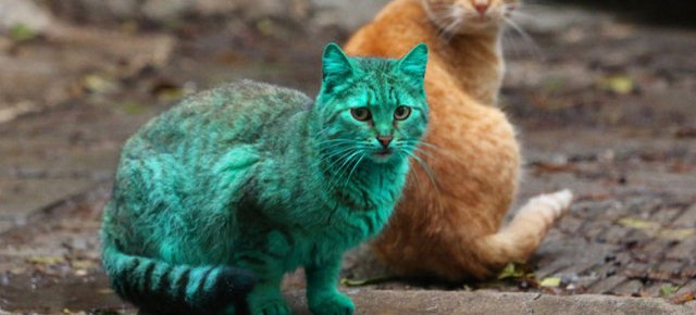 Un gatto verde smeraldo