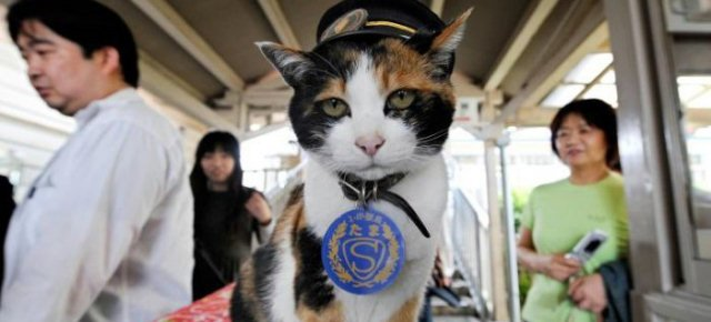 In Giappone un gatto diventa capostazione