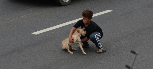 Attraversa l'autostrada per salvare un cane