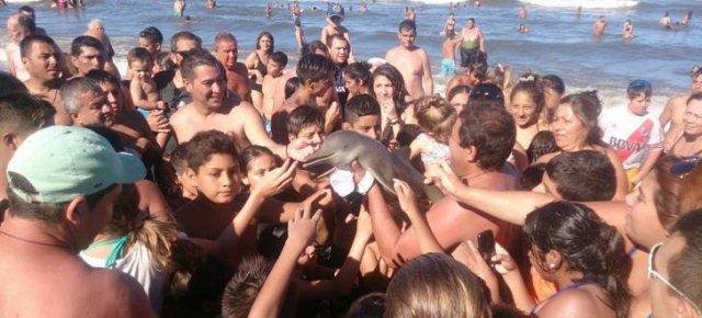 Piccolo delfino ucciso dai selfie dei turisti