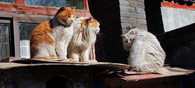 Houtong, la città dei gatti