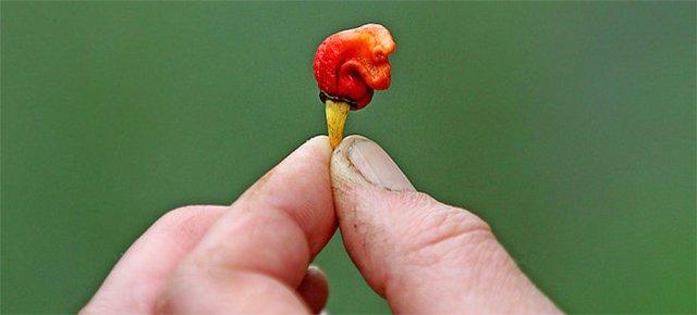 Il peperoncino così piccante che può uccidere