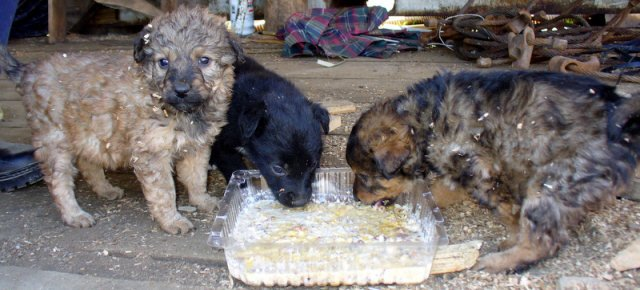 Il suo lavoro? Assaggiare cibo per animali