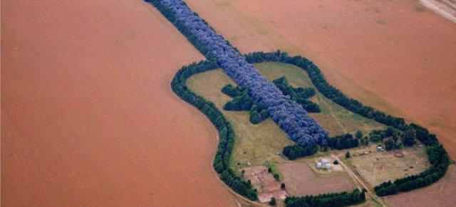 Pianta una foresta a forma di chitarra