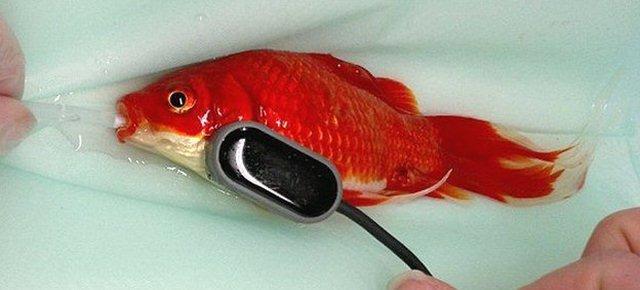 Spende 500€ per curare il suo pesce rosso