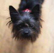 Scopre tradimento grazie al cane