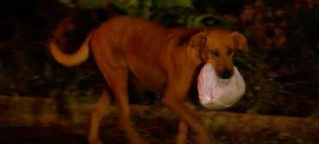 Il cane che porta il cibo ai suoi amici