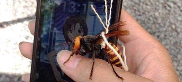 Addomestica una vespa gigante