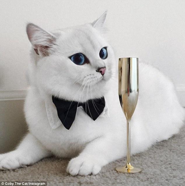 Coby, il gatto con gli occhi più belli al mondo 2