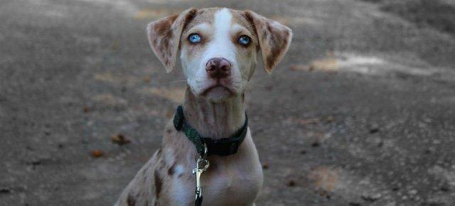 Cloneresti il tuo cane per 100.000 dollari?