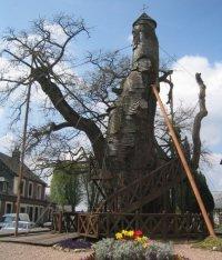 L'incredibile cappella di Oak